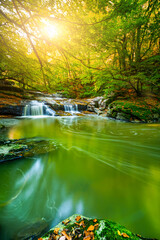 The view of the colors in nature with the river flowing among the lush green trees in the forest. As the sun rises, the colors in nature come alive.