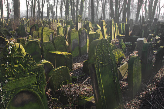 Gravestones amidst the undergrowth in the New Jewish Cemetery in Miodowa Street, Krakow, Poland. The neglected, overgrown cemetery is in the historic Jewish neighborhood of Kazimierz.