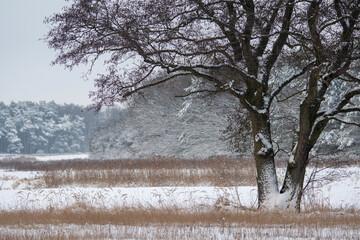 winter in lower saxony, Dannenbuettel, Germany