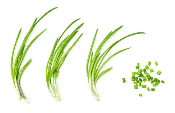 Collection of young green onion isolated on white background