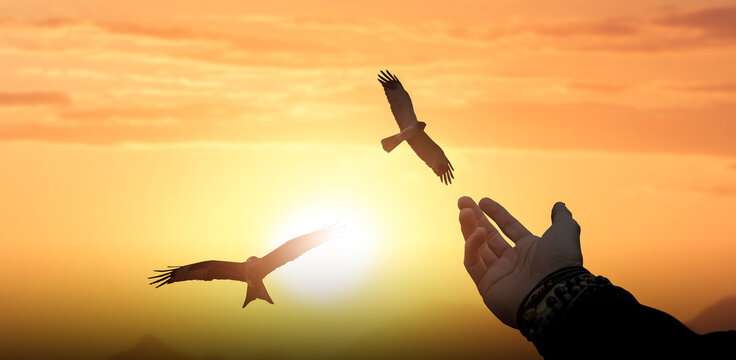 Man hand open and eagles bird fly on sunset.
