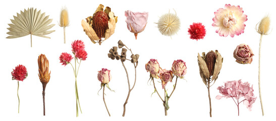Set with beautiful dry flowers on white background, banner design