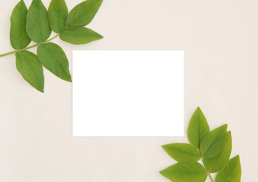 Empty horizontal 5x7 card mockup, invitation, thank you card, wedding stationery, green leaves, flat lay, top view.
