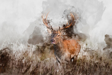 Digital watercolor painting of Beautiful image of red deer stag in vibrant golds and browns of Autumn Fall landscape forest