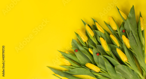 Yellow tulips. Bouquet on a yellow background. postcard on March 8, mother's day, birthday. space for the text.