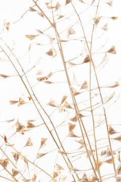 Branches romantic beige color shepherd's bag dry little heart shape flowers vertical wedding invitation