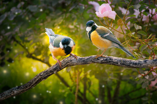 Fantasy Portrait Of two Tit Birds Sitting on tree branch in Magical enchanted Fairy Tale dreamy elf Forest, fabulous Fairytale pink Rose Flower Garden and Cute Songbirds, Spring morning sunshine