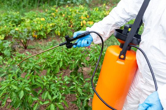 Weed killer herbicide glyphosate spraying. Non-organic vegetables.