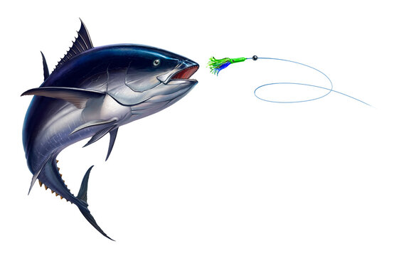 Dark tuna tuna fish, Bluefin tuna attacks Bait Sea Swim Squids realistic illustration. Black fin yellow tuna in a jump.