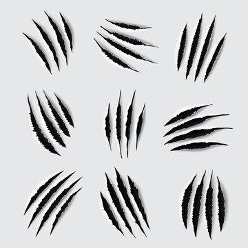 Scratches and claw marks of animal paws. Vector torn traces of tiger, lion, cat or bear monster, slashes or scars of dinosaur or werewolf beast attack, tattoo or t-shirt print design