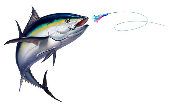 Black fin tuna attacks Bait Sea Swim Squids realistic illustration. Black fin yellow tuna in a jump.
