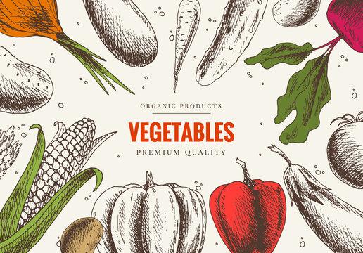 Vegetables hand drawn. Market menu design. Color organic food poster. Linear graphic. Healthy food frame in vintage style