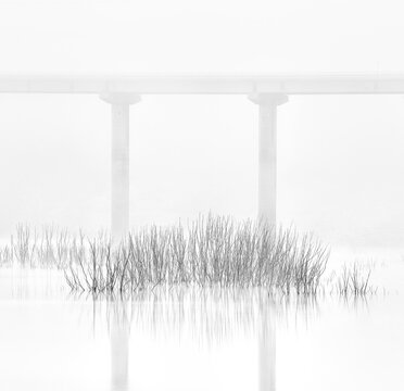 Plants in the swamp framed by a road bridge in the background on a foggy day