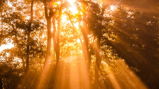 From below scenery of bright sun rays penetrating branches of tall trees in morning forest