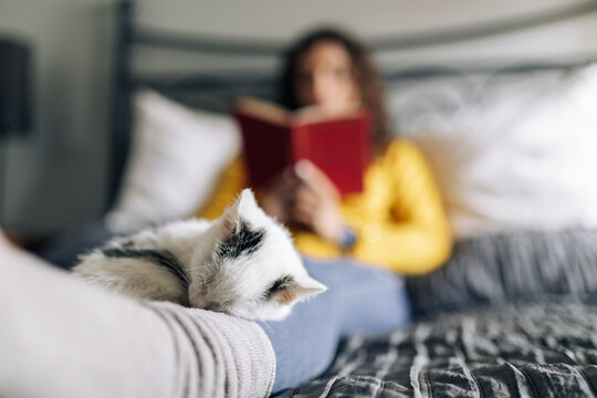 Sweet adorable kitten cuddling and sleeping on legs of female owner resting on bed with interesting book