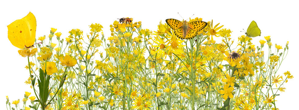 large group of wild yellow flowers and insects on white
