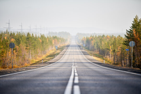 Ground level of straight empty road going through coniferous woods in autumn on sunny day