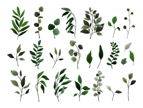 Collection of greenery leaves branch twig flora plants. Floral watercolor wedding objects, botanical foliage. Vector elegant herbal spring illustration for invitation card