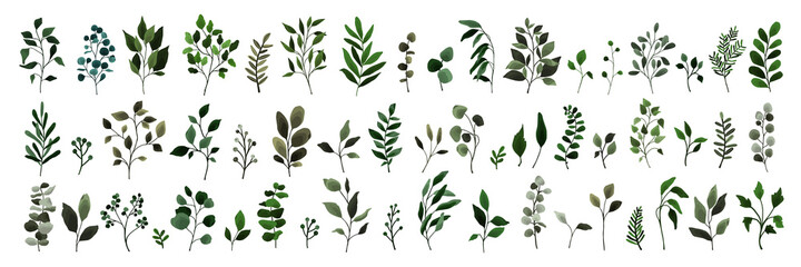 Fototapeta Collection of greenery leaves branch twig flora plants. Floral watercolor wedding objects, botanical foliage. Vector elegant herbal spring illustration for invitation card obraz