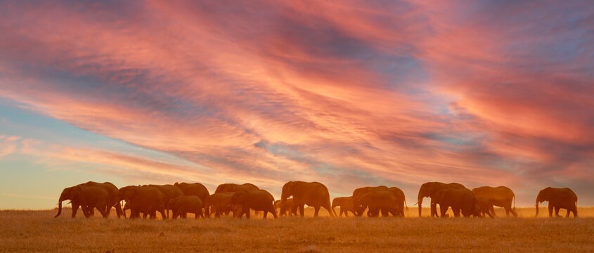 an elephant family walks the African plains at sunset