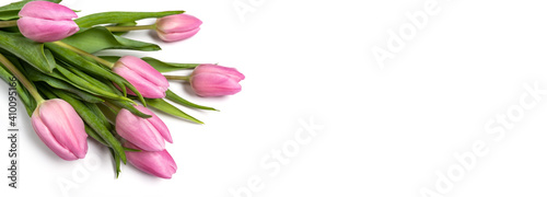 Pink tulips isolate on a white holiday banner. Floral spring background for valentine's day, March 8, birthday, mother's day. copy space