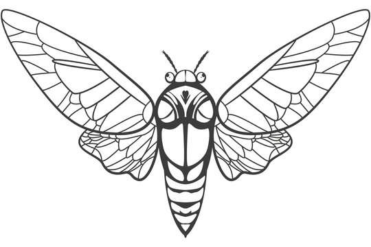 Cicada tattoo vector illustration isolated on a white background.