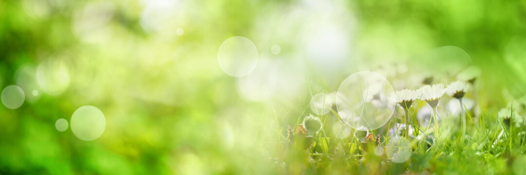 Abstract sunny spring background. Green meadow with wildflowers and bright bokeh. Concept for ecology and vacation with space for text