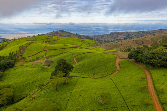 An aerial view of tea fields and roads at a tea estate in the highlands of Malawi.