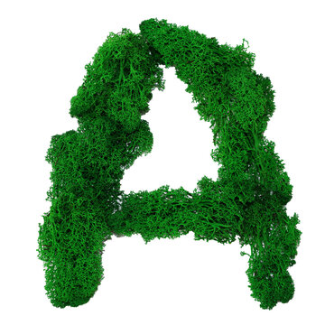 Letter A of the English alphabet made from green stabilized moss, isolated on white background