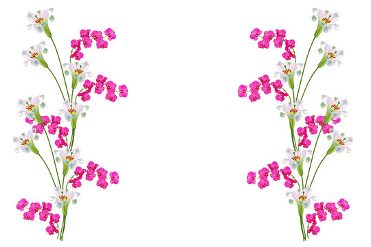 Pink orchid. Bright lily flowers isolated on white background.