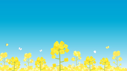 菜の花 青空 景色 風景