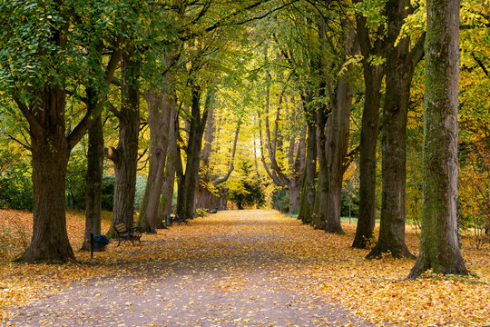 Treelined footpath in autumn park