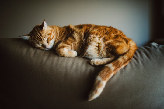 Close-up of ginger cat sleeping on sofa against wall at home