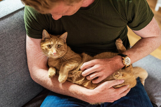 Man carrying cat while sitting on couch at home