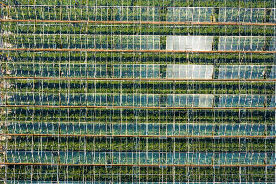 Aerial birdseye view above large greenhouses in the UK