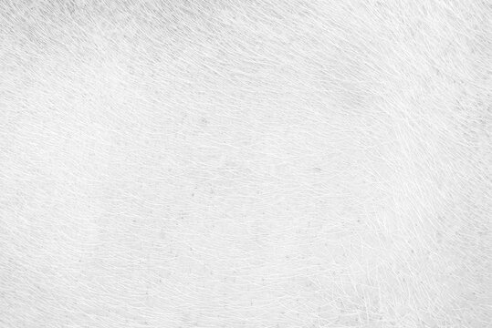 White Skin and Hair of Pig Texture Background.