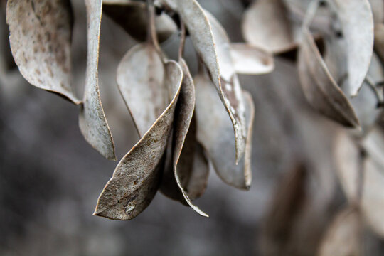 Close up of leaves in the cold days of winter at Almaden Quicksilver County Park in Los Gatos, CA.