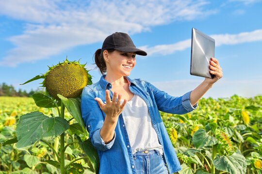 Woman farmer making video inspection of agricultural field with sunflower plants