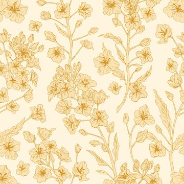 Elegant seamless pattern of rapeseed plant or canola flowers. Endless repeatable floral texture in retro style. Backdrop design for printing. Hand-drawn monochrome detailed vector illustration
