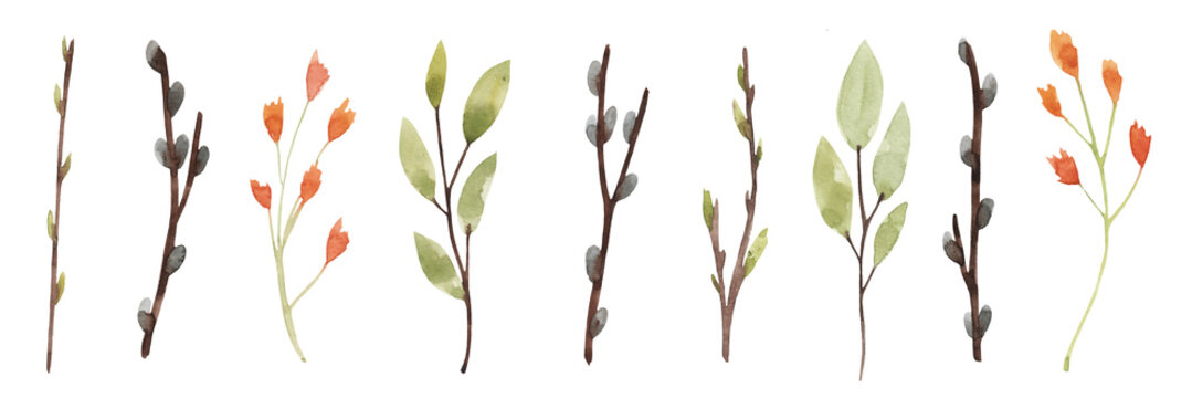 Watercolor set of spring twigs and flowers. Isolated on white background. Drawn by hand. Willow, green leaves, buds.