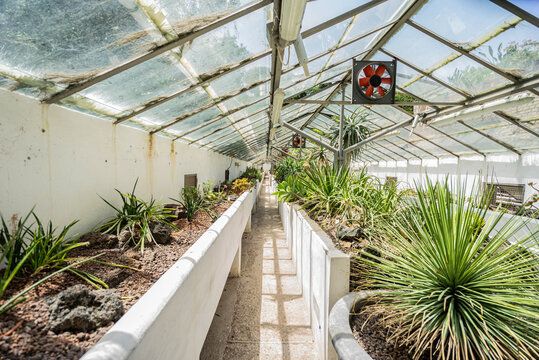greenhouse with plants (wicked plants: succulents, cacti)