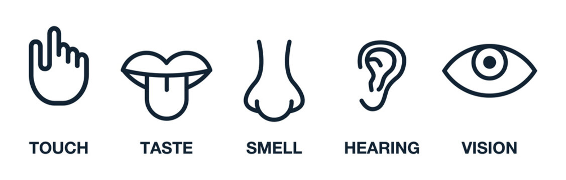 Five human senses vision eye, smell nose, hearing ear, touch hand, taste mouth and tongue. Line icons set.