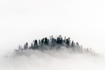 Pienińskie lasy we mgle.