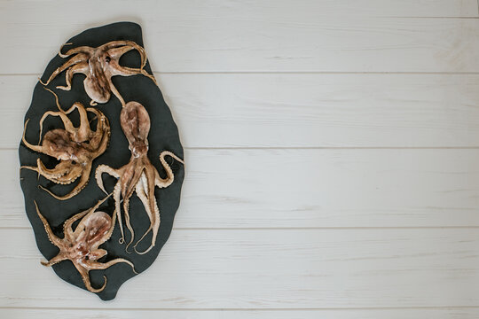 fresh octopuses with a place for the text