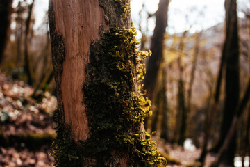old tree with moss in foreground in the forest