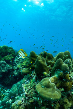 underwater scene with coral reef and fish,phi phi island,Thailand.