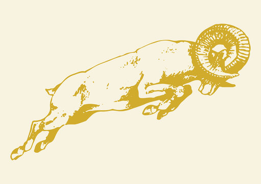 Sketch of Indian Big Horn Sheep or Goat Outline Editable Illustration