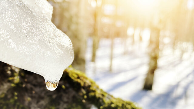 Water drop of melting ice on sunny forest scene. Springtime thaw. Global warming. Climate change. Ice melting.