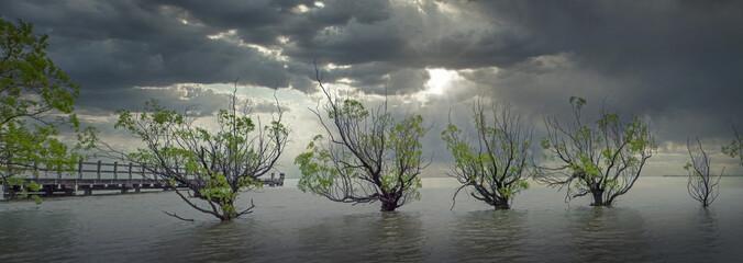 Glenorchy lake wakatipu, trees in water, panorama. New Zealand.