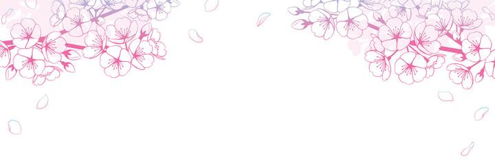 桜の背景素材 グラデーション